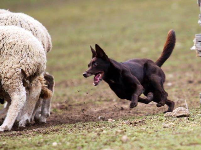 club canin wihr au val